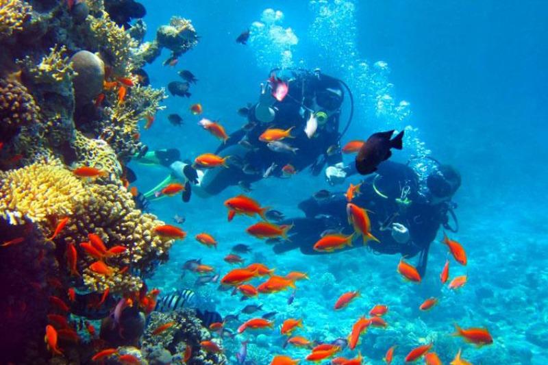 Diving_LaSirena1